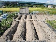 耕作放棄地を剣先スコップで畑に開拓!週2日家庭菜園有機野菜栽培の記録     byウッチー-121009畝・畝間交換と畝間を深く掘る方法と意味01