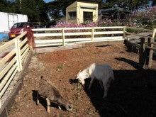 馬を愛する男のブログ Ebosikogen Horse Park-ヤギ柵完成