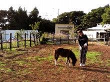 馬を愛する男のブログ Ebosikogen Horse Park-ほたるの散歩