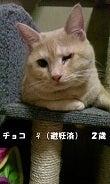 『長崎わんにゃん会』&『まりごんち』 ~保護日記~