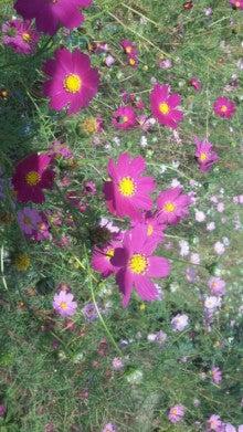 MICHIRUハーブの庭-111021_1237~02.jpg