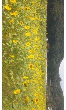 空と花と猫...-SH3J1841.jpg