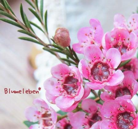 さんぽdeのんびり知育~『おさんぽ花育』公式ブログ-ピンク赤目ワックスフラワー