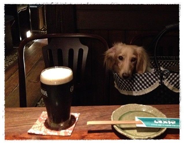 犬旅コンサルタントMiwaのブログ-さうだぁで