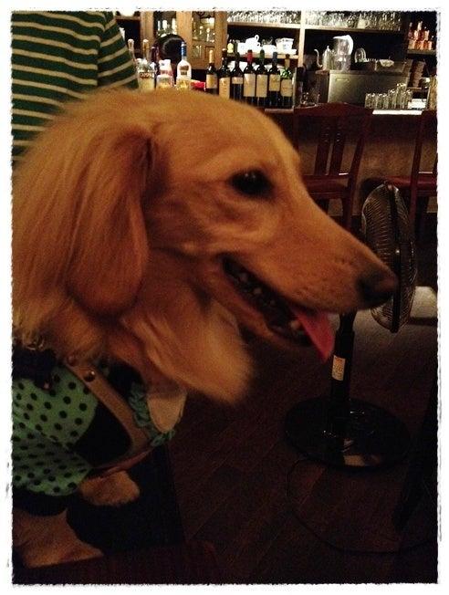 旅犬Lani&Leaのほほん風船記-Kaffa Cafe