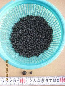 黒千石大豆と丹波黒大豆
