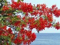 バリ島 くらげのjalan-jalan-kayu apiapi