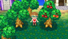 の おいしい フルーツ どうぶつ とびだせ 森 とびだせ どうぶつの森の裏技