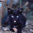 子グマのような黒猫