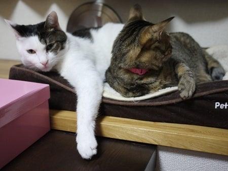 レディア&シャーレと幸せ生活