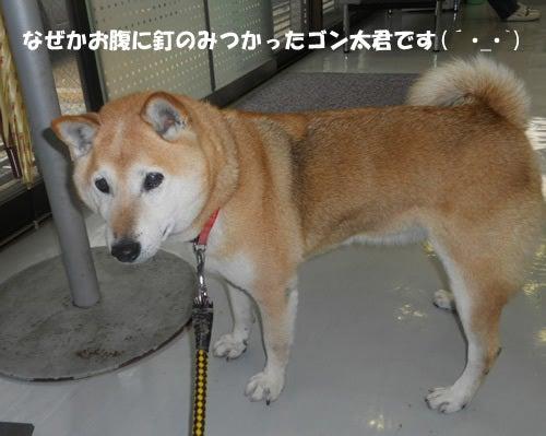 Shippo-family しっぽファミリー日誌
