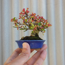 ミニ盆栽とフルBON…