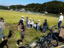かもの子農園でボランティアしよう♪-稲刈り作業風景01