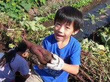 かもの子農園でボランティアしよう♪-大きなおイモ
