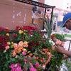 マルシェでバラ100本をオトナ買いの画像