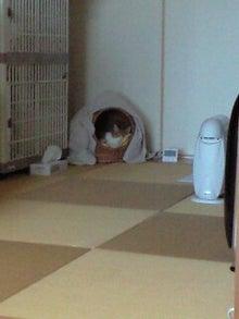 ずれずれブログ…湘南で猫と暮らせば…-121027_1555~0001.jpg