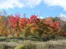 ほべつの森のこばなし帳-モミジ林の紅葉(2012.10.26)