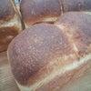 天然酵母パン研修①の画像