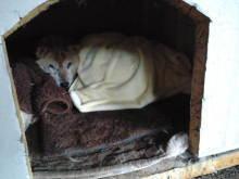 幸せを運ぶ天使 NEWWAY.DogRescue活動ブログ