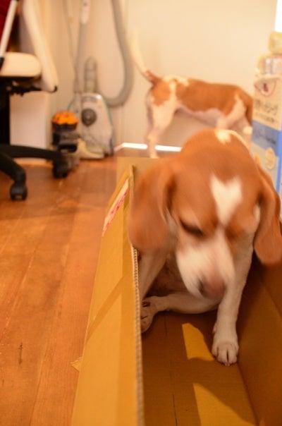 レイちんの箱があったら入りたい♪