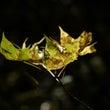 「秋の始まりを感じた…