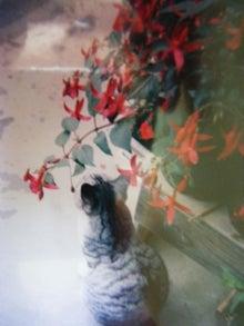 花 and 風 のねごと         hana & fuu * * *