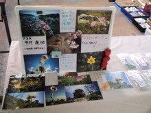 $『心援隊』びわこのブログ-がれきに咲く花