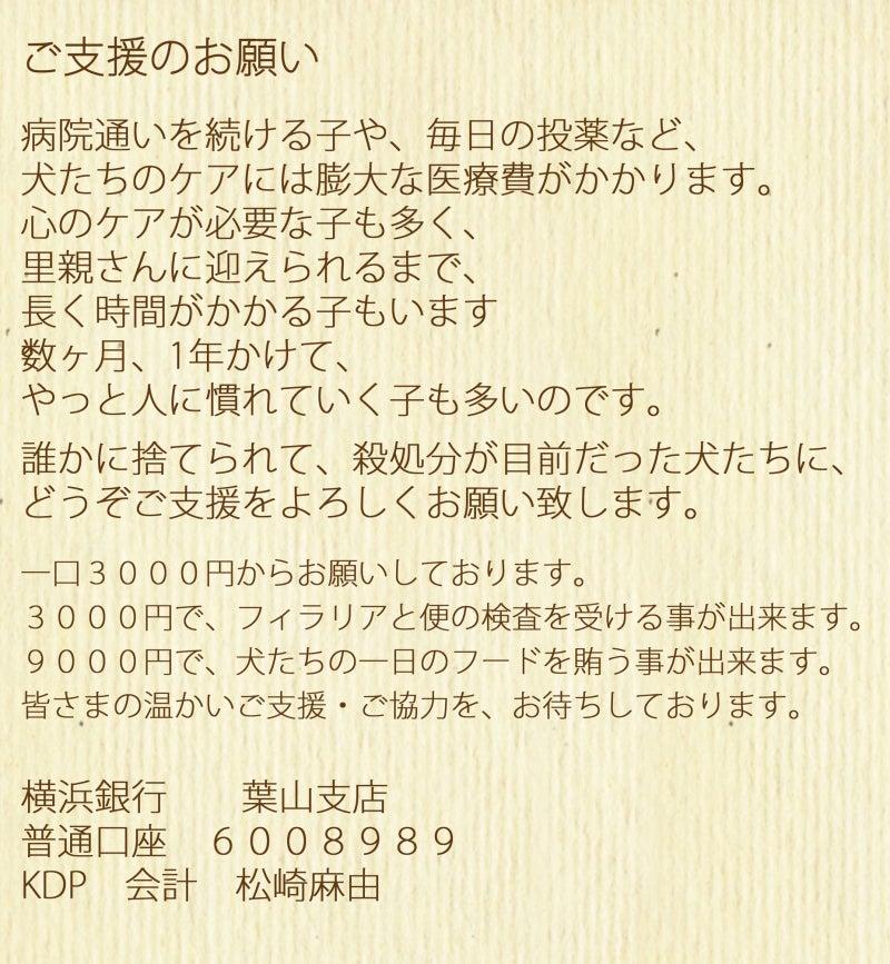 2012/12/27 三日目のクリスマスと福島から来た子犬たちの記事より