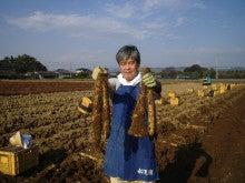 大和芋 シゲオ農園-24年度産