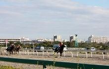 タノシンジョイ!-20121102船橋8R_22
