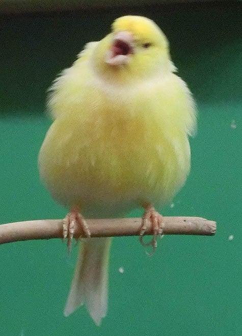 ようこそ!とりみカフェ!!~鳥カフェでの出来事や鳥写真~-04