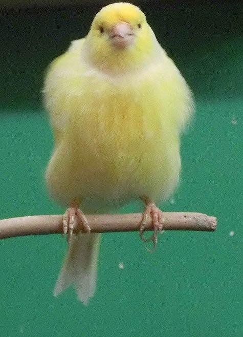 ようこそ!とりみカフェ!!~鳥カフェでの出来事や鳥写真~-13