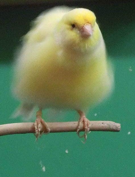 ようこそ!とりみカフェ!!~鳥カフェでの出来事や鳥写真~-23