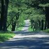 陣馬山で自然とつながり、心と身体の声を聴くの画像