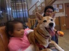 -雑種犬ココ&娘との生活--121020_172504.jpg