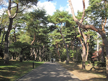 るぅのひとりゴトin函館 ☆人生FULL THROTTLE☆-松の木