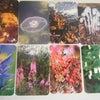 * フラワーカウンセリングと観音カードで初体験のお客様の画像