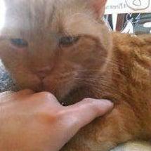 猫(゜Д゜)