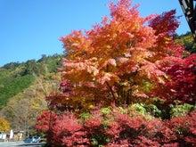 埼玉県草加市松原にある「ほぐし庵」は体も心もほぐします-都民の森