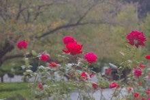 $東京スカイツリーや江東区近辺の情報を取材&発信するブログ