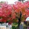 秋真っ盛りの画像
