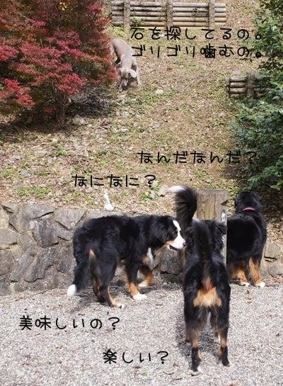 mitomonのブログ