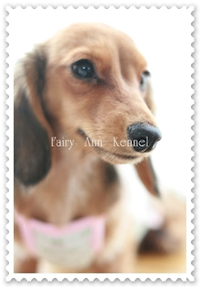 Fairy Ann Kennel