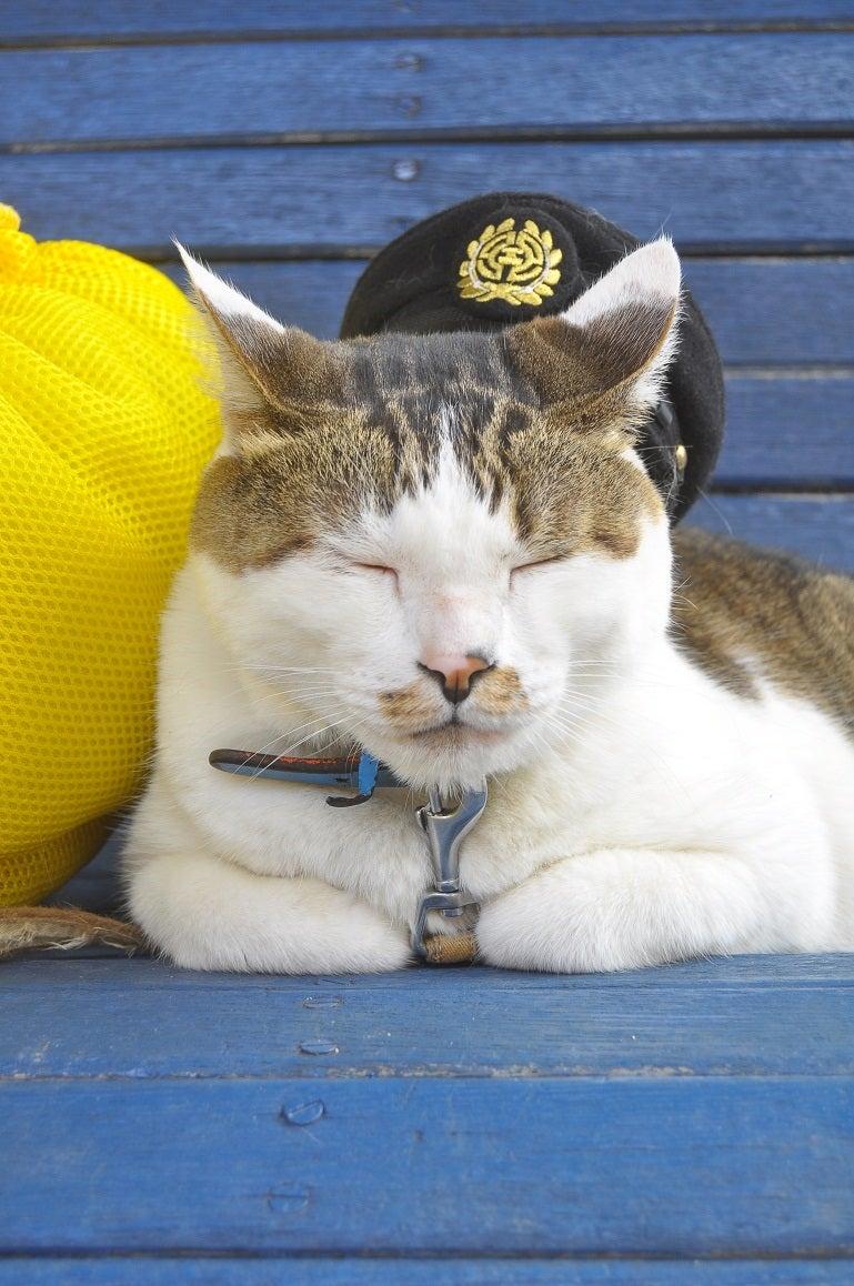 駅長猫コトラの独り言~旧 片上鉄道 吉ヶ原駅勤務~-よろしくやで