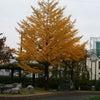 東京も段々冬が近付いて来ました、、、の画像