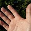手のひらを太陽にの画像