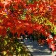 京都の紅葉2
