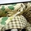 コタツのヒラメちゃんの画像