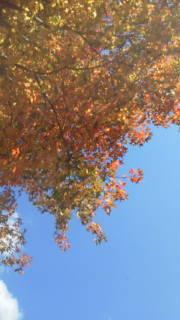 chouchouのHAPPY LIFE!-20121115130618.jpg