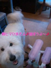 じょわっぷ~日記-mini_121117_15230001.jpg